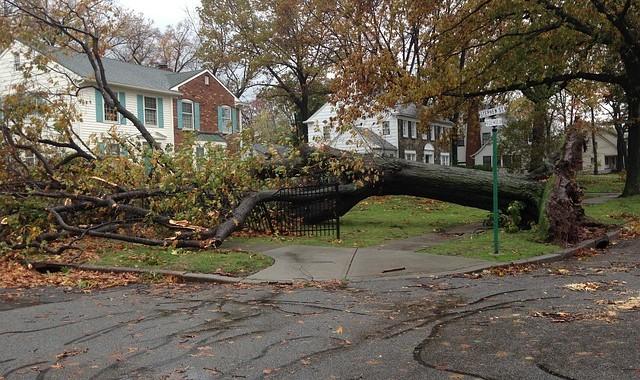 Georgia fallen tree